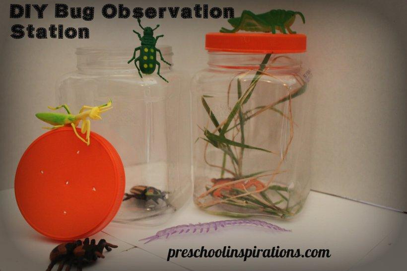 DIY Bug Observation Station Preschool Inspirations